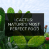 Cactus Nature Most Perfect Food on Nourish Natural Wellness