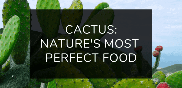 The Amazing Nutritional Powers of Cactus